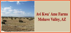 fort mojave indian tribe - Avi Kwa' Ame Farms Mohave Valley, AZ